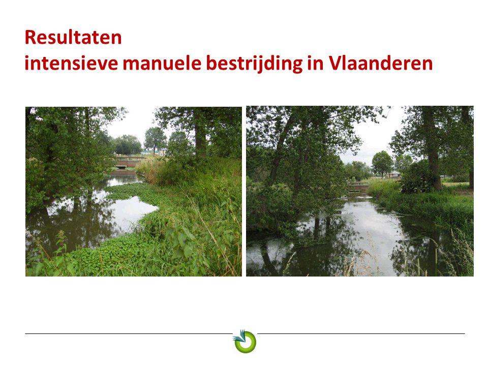 Resultaten intensieve manuele bestrijding in Vlaanderen