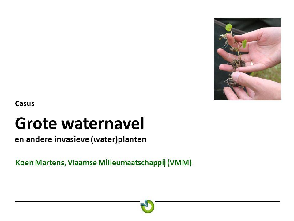 Grote waternavel en andere invasieve (water)planten