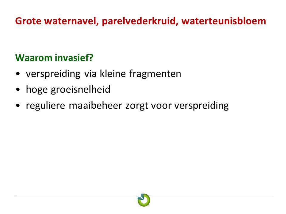 Grote waternavel, parelvederkruid, waterteunisbloem