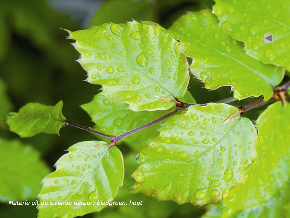 Materie uit de levende natuur: bladgroen, hout