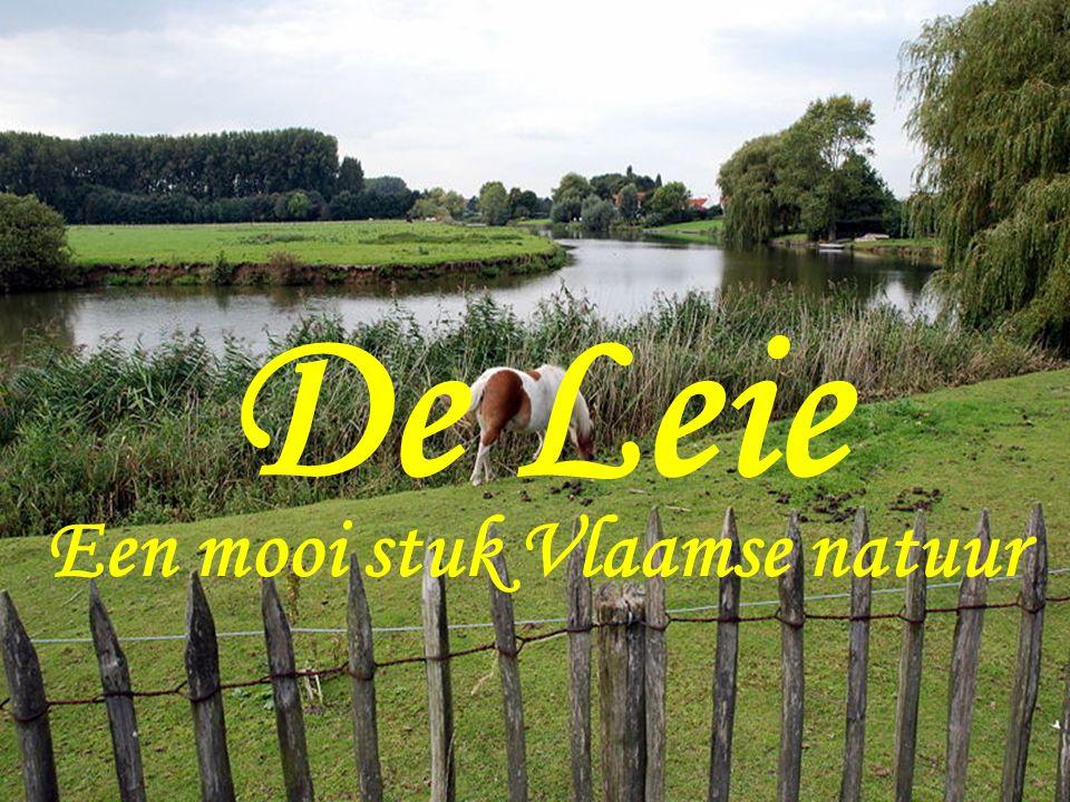 Een mooi stuk Vlaamse natuur