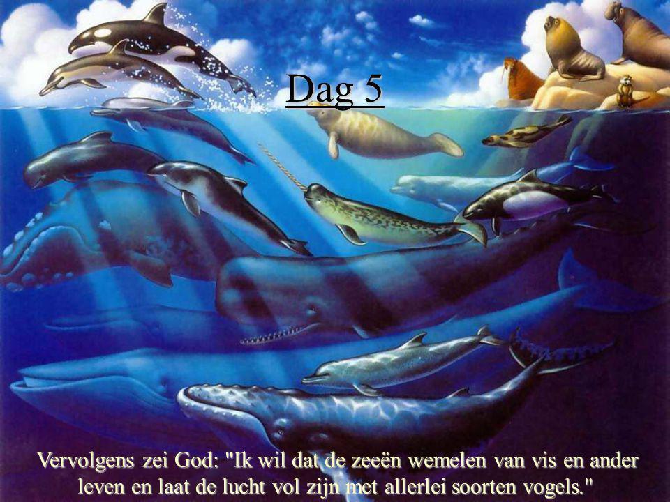 Dag 5 Vervolgens zei God: Ik wil dat de zeeën wemelen van vis en ander leven en laat de lucht vol zijn met allerlei soorten vogels.