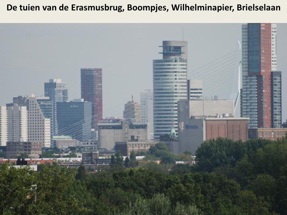 De tuien van de Erasmusbrug, Boompjes, Wilhelminapier, Brielselaan