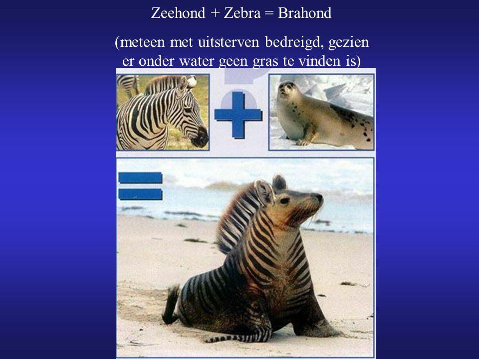 Zeehond + Zebra = Brahond