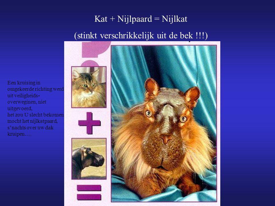 Kat + Nijlpaard = Nijlkat (stinkt verschrikkelijk uit de bek !!!)