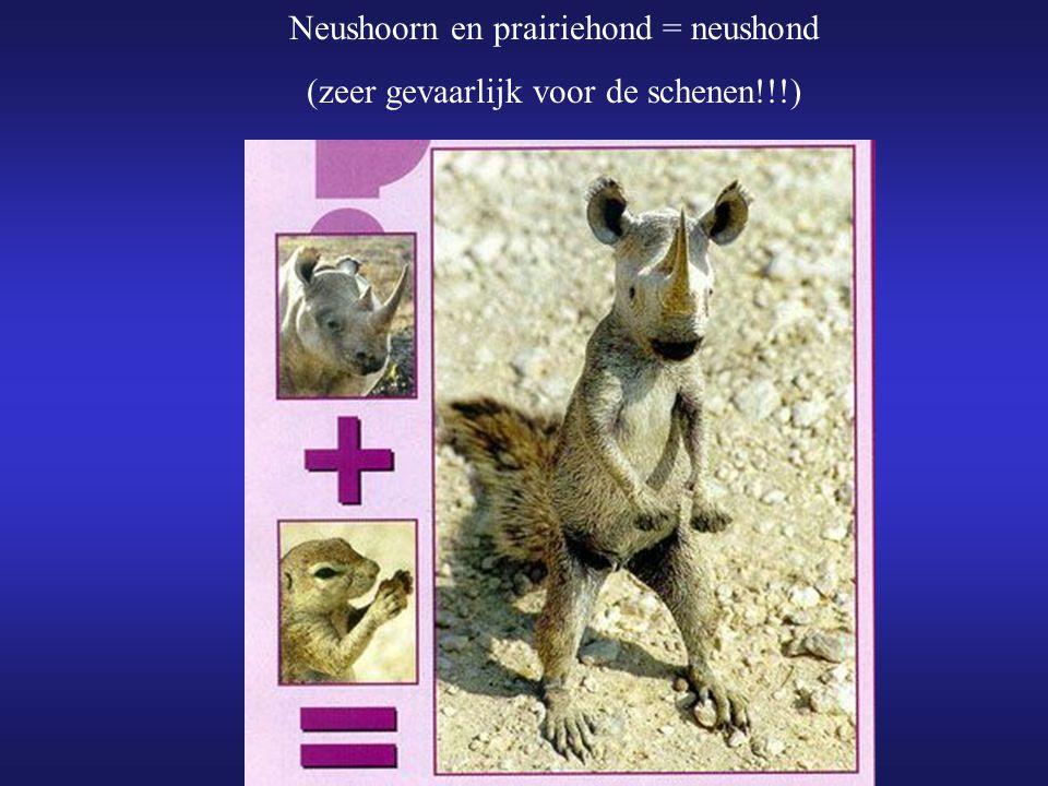 Neushoorn en prairiehond = neushond