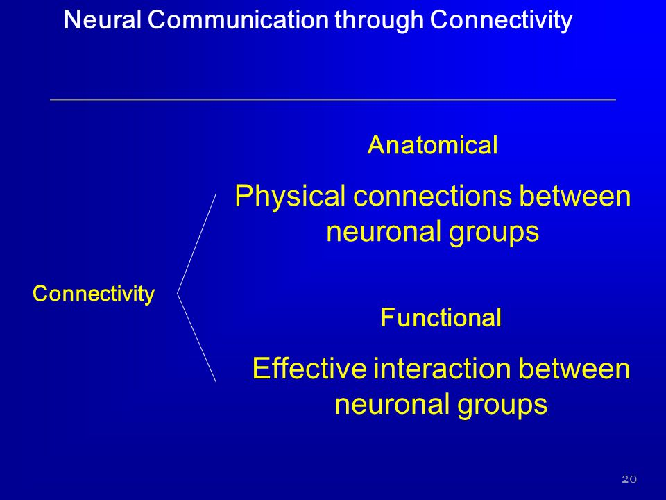 Physical connections between neuronal groups