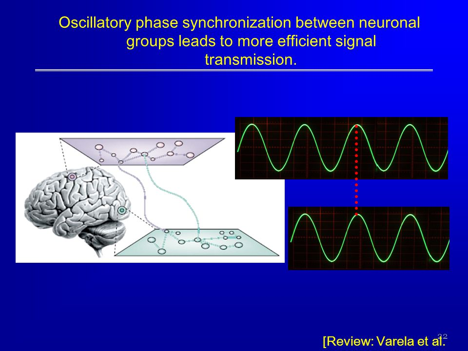 Oscillatory phase synchronization between neuronal groups leads to more efficient signal transmission.