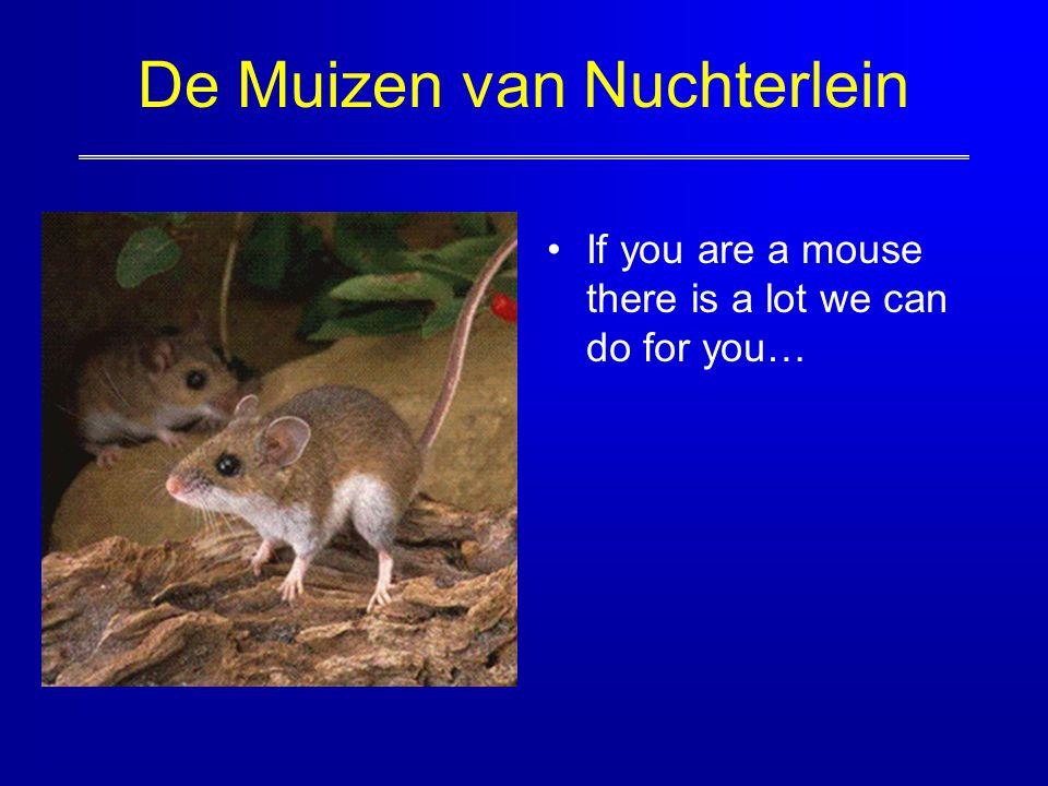De Muizen van Nuchterlein