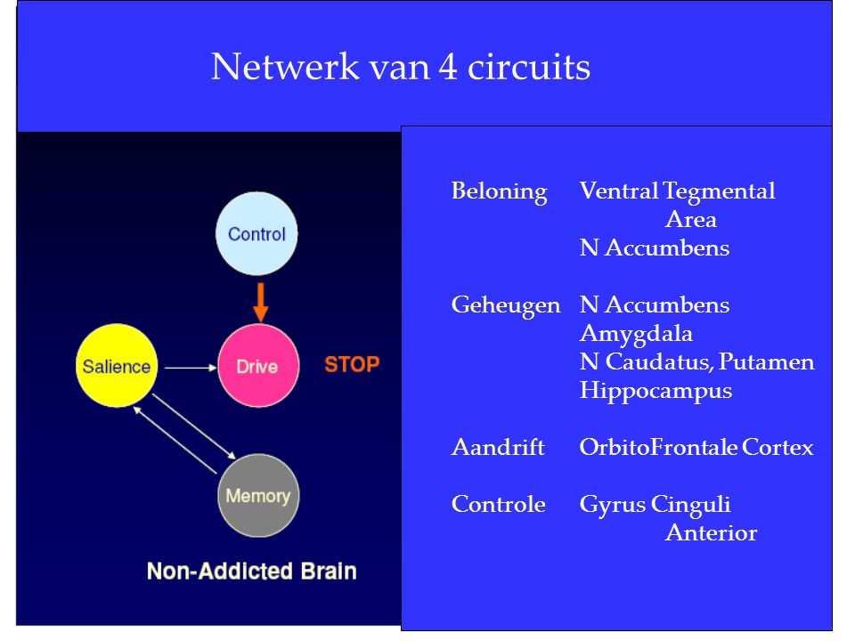 Netwerk van 4 circuits Beloning Ventral Tegmental Area N Accumbens