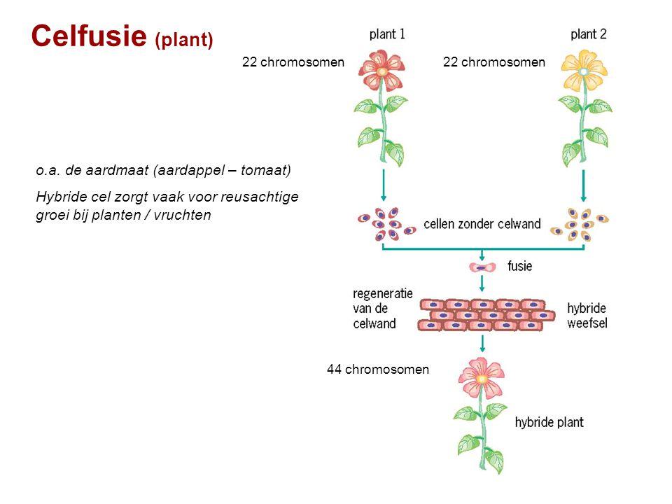 Celfusie (plant) o.a. de aardmaat (aardappel – tomaat)