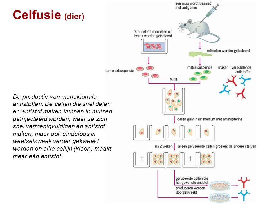 Celfusie (dier)