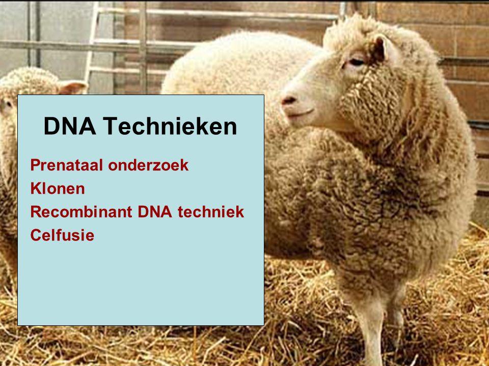 DNA Technieken Prenataal onderzoek Klonen Recombinant DNA techniek
