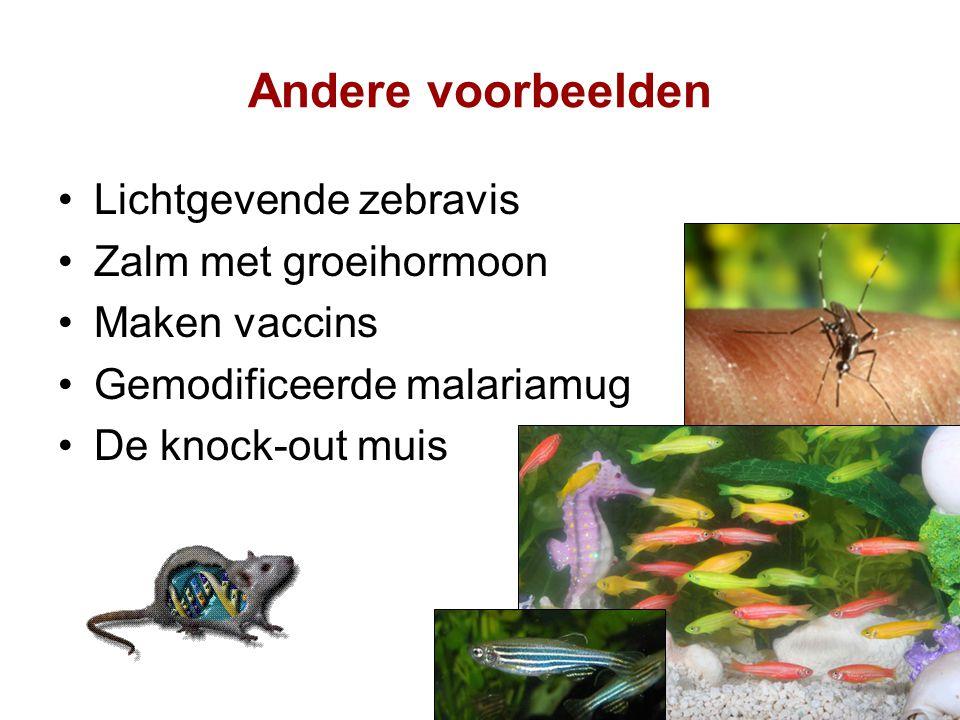 Andere voorbeelden Lichtgevende zebravis Zalm met groeihormoon