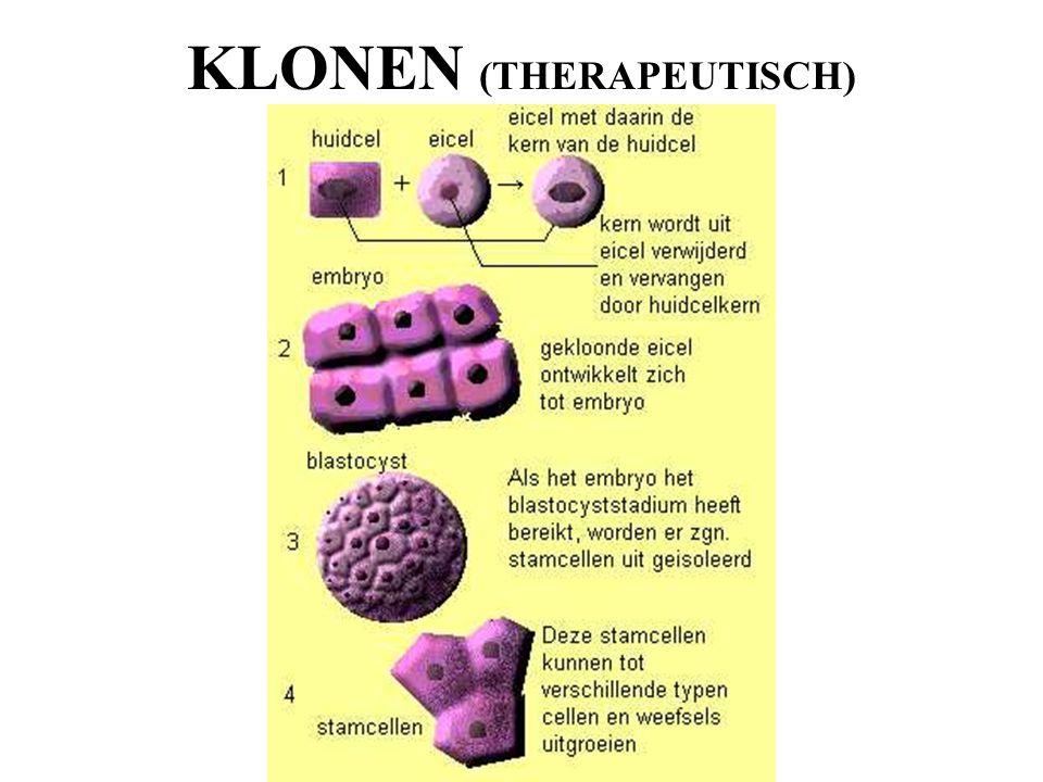 KLONEN (THERAPEUTISCH)