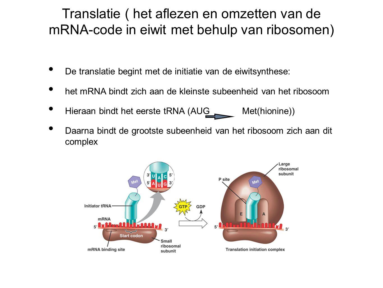Translatie ( het aflezen en omzetten van de mRNA-code in eiwit met behulp van ribosomen)
