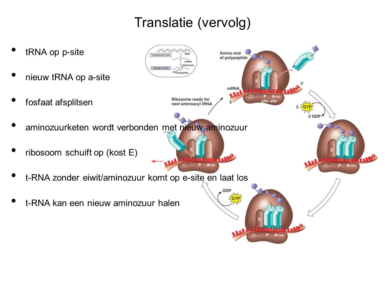 Translatie (vervolg) tRNA op p-site nieuw tRNA op a-site
