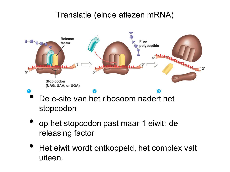 Translatie (einde aflezen mRNA)