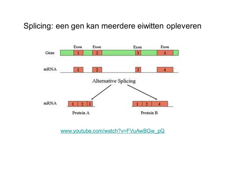 Splicing: een gen kan meerdere eiwitten opleveren