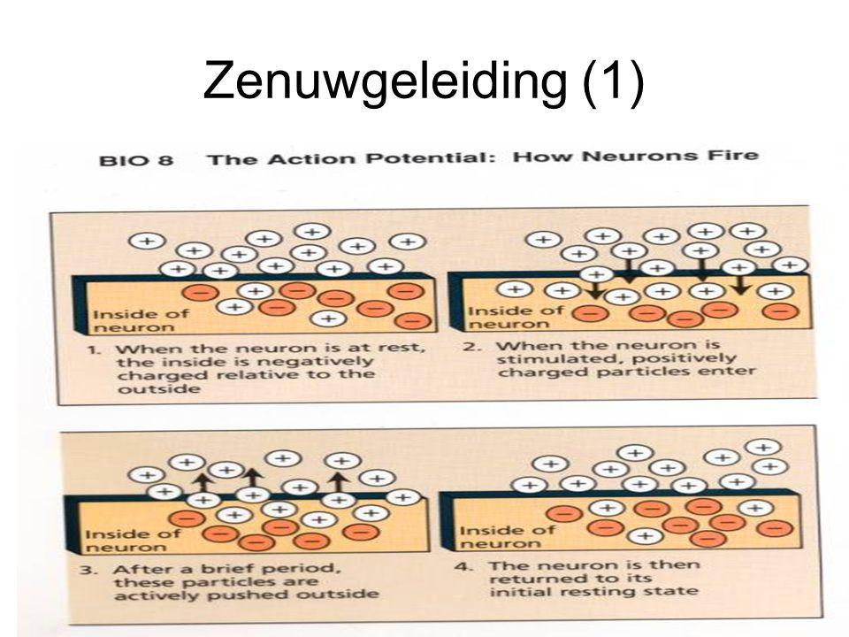 Zenuwgeleiding (1)
