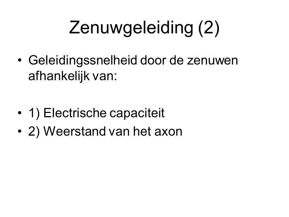 Zenuwgeleiding (2) Geleidingssnelheid door de zenuwen afhankelijk van: