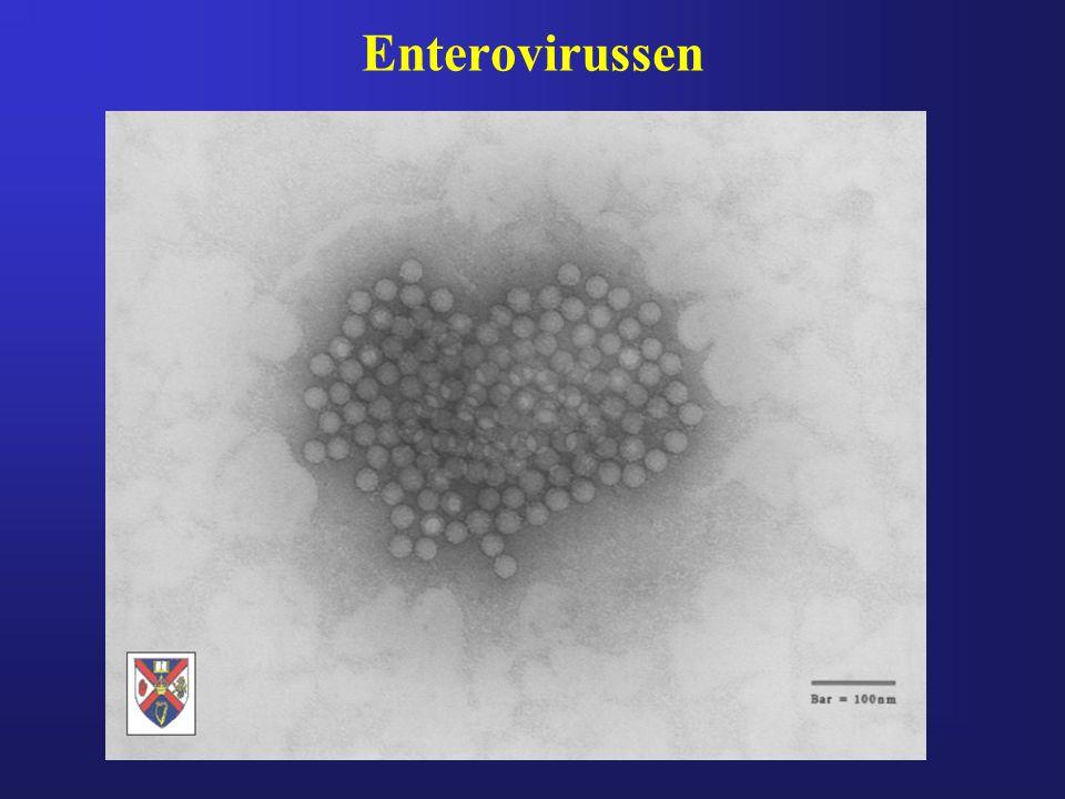 Enterovirussen