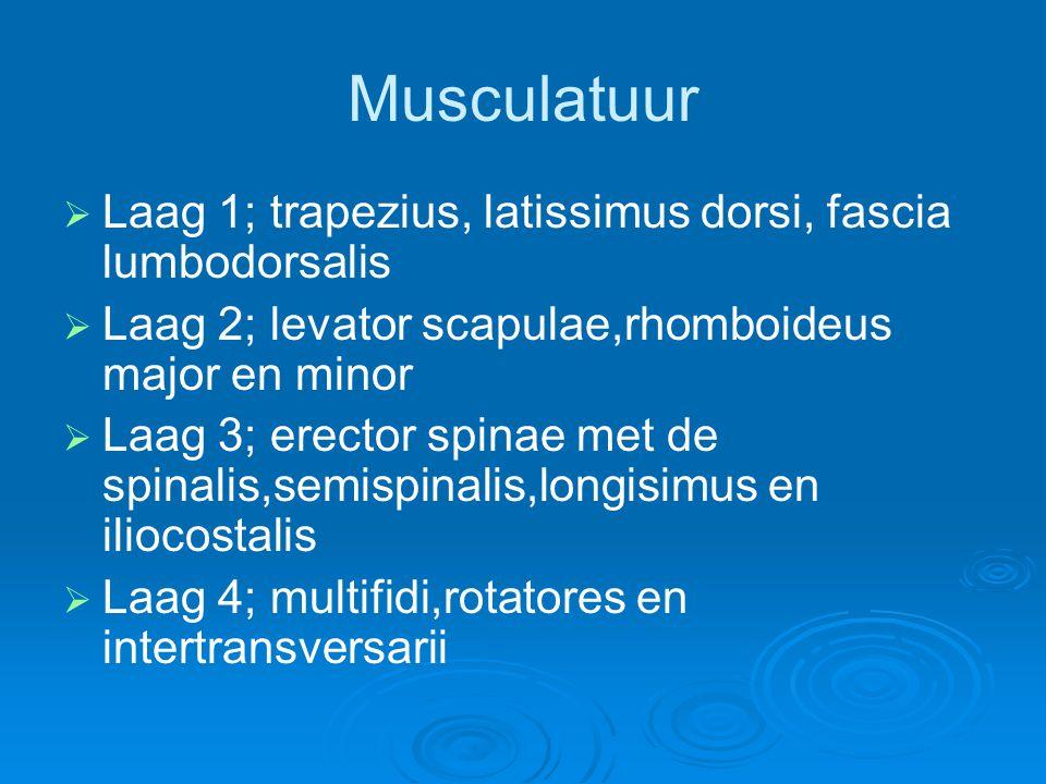 Musculatuur Laag 1; trapezius, latissimus dorsi, fascia lumbodorsalis