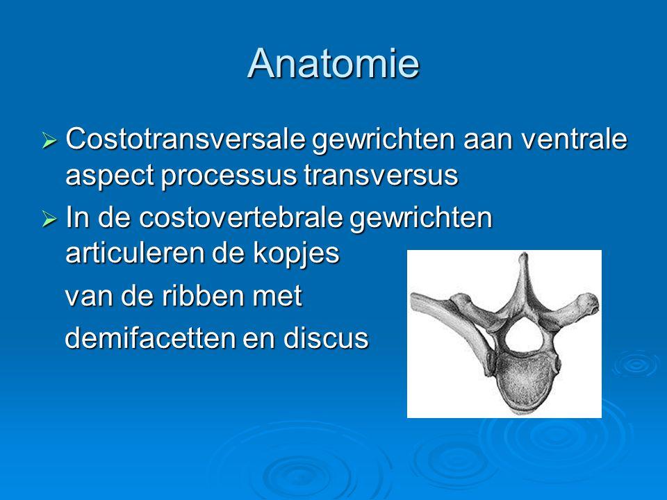 Anatomie Costotransversale gewrichten aan ventrale aspect processus transversus. In de costovertebrale gewrichten articuleren de kopjes.