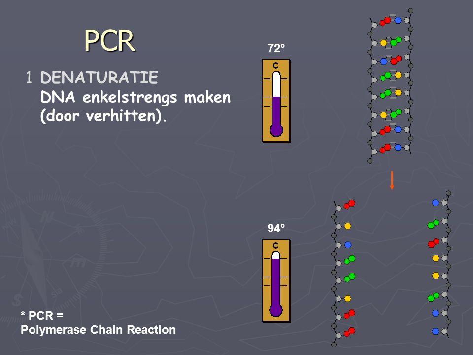 PCR DENATURATIE DNA enkelstrengs maken (door verhitten). 72° 94°