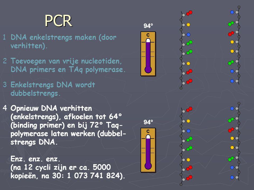 PCR DNA enkelstrengs maken (door verhitten).