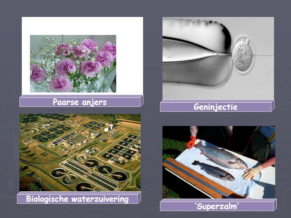 Biologische waterzuivering