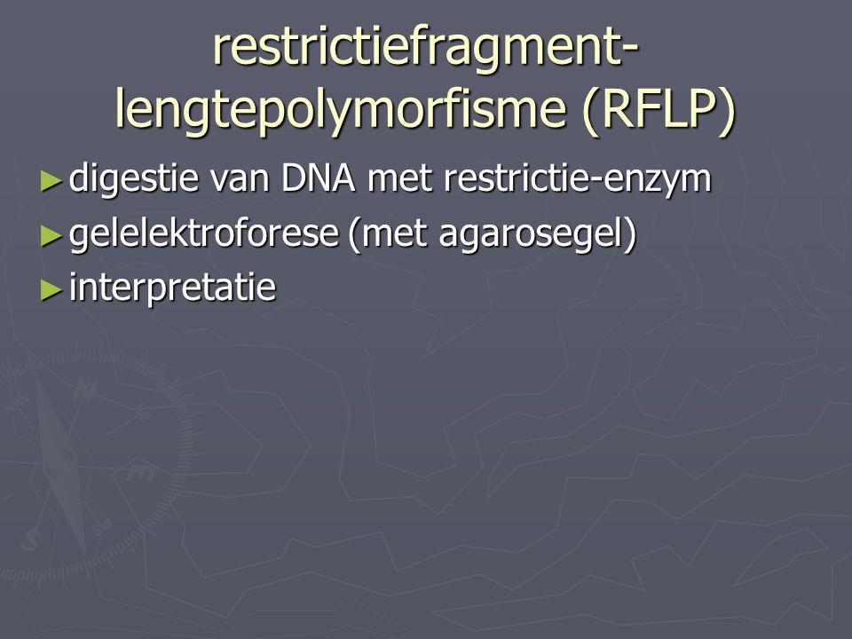 restrictiefragment-lengtepolymorfisme (RFLP)