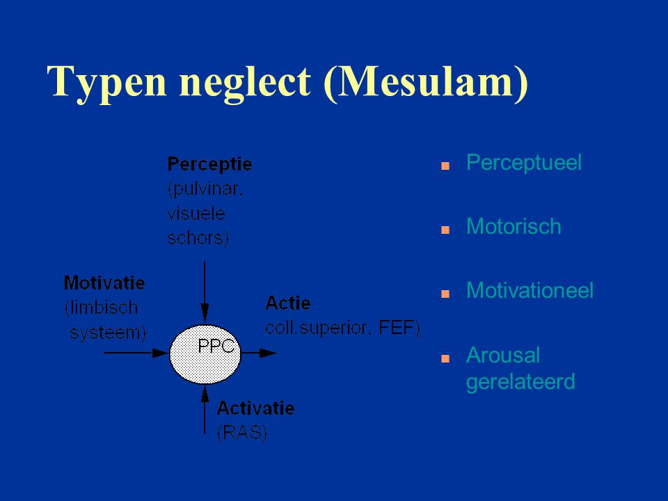 Typen neglect (Mesulam)