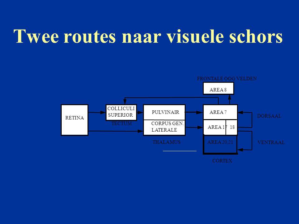 Twee routes naar visuele schors