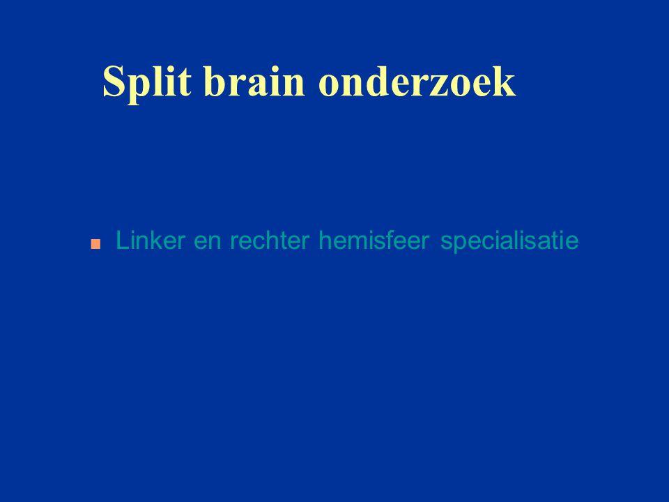 Split brain onderzoek Linker en rechter hemisfeer specialisatie