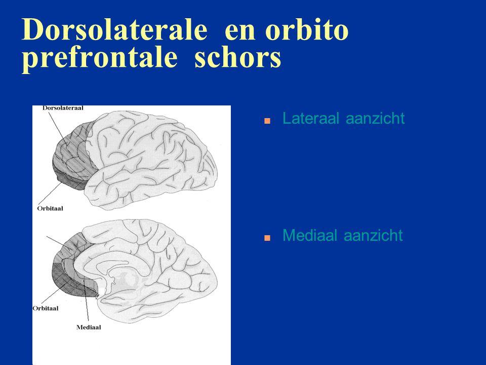 Dorsolaterale en orbito prefrontale schors