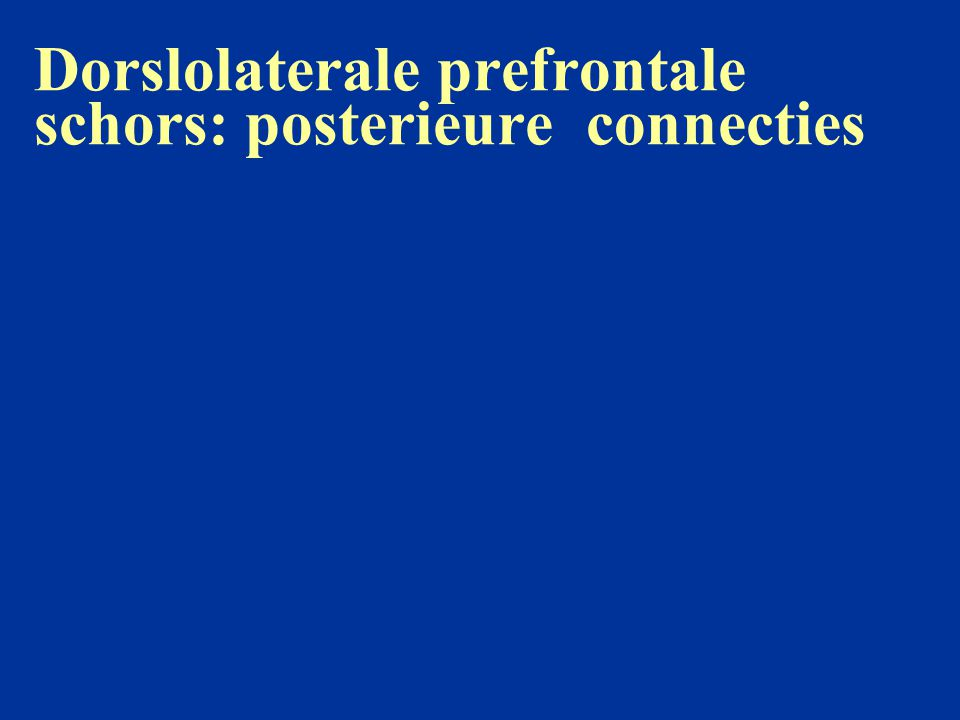 Dorslolaterale prefrontale schors: posterieure connecties