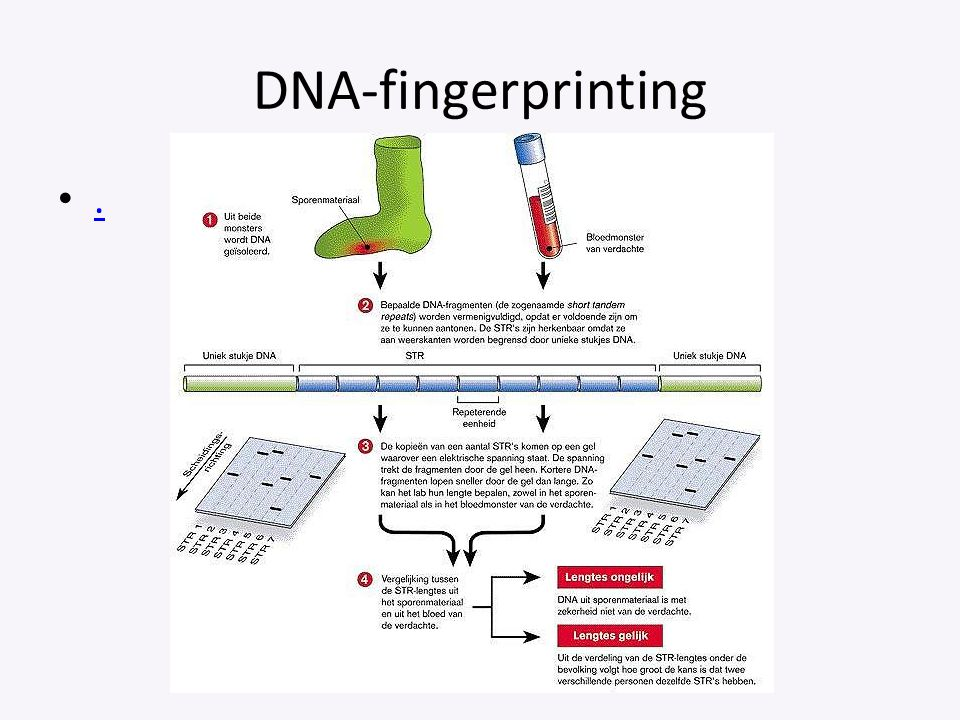 DNA-fingerprinting . Afbeelding: filmpje in het engels over DNA-fingerprinting.