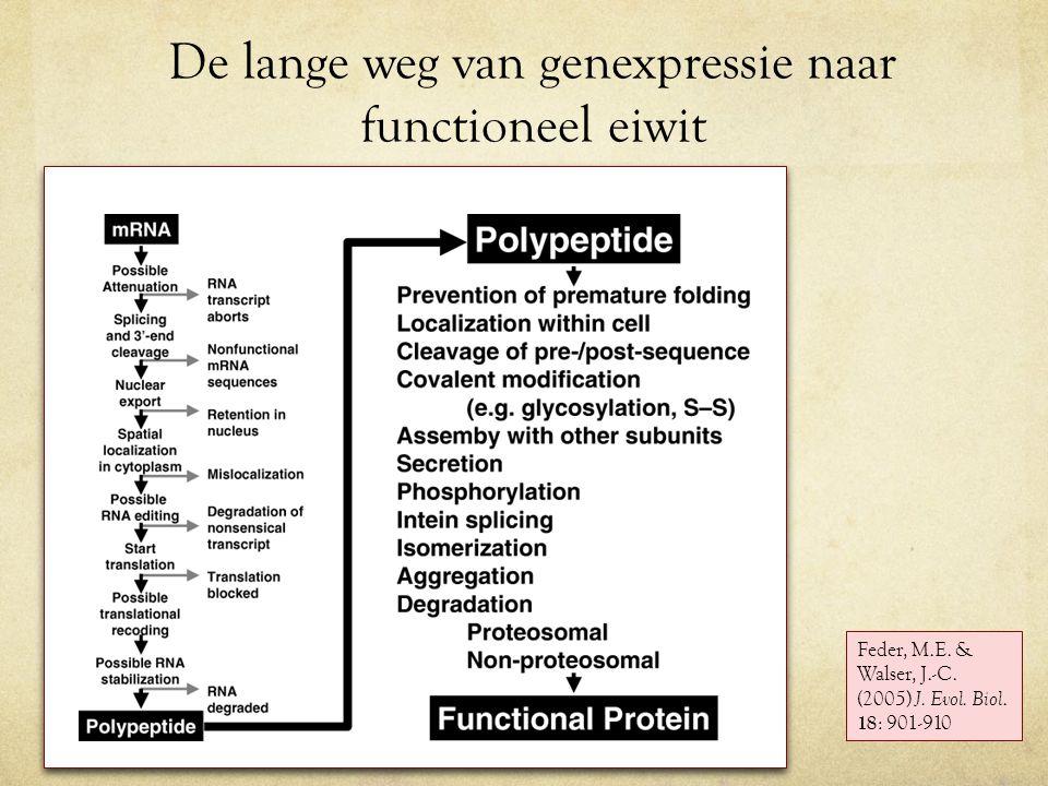 De lange weg van genexpressie naar functioneel eiwit