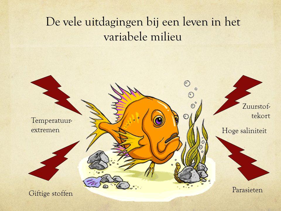 De vele uitdagingen bij een leven in het variabele milieu