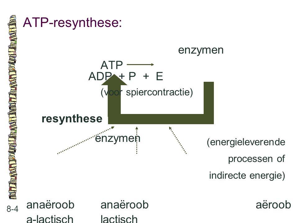 ATP-resynthese: enzymen ATP ADP + P + E (voor spiercontractie)
