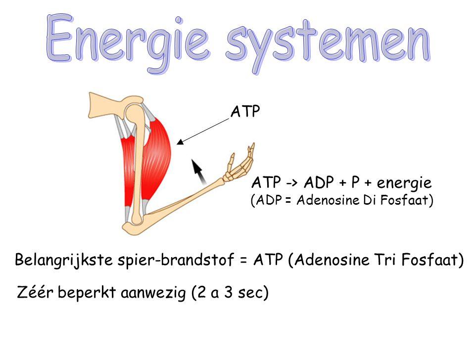 Energie systemen ATP ATP -> ADP + P + energie