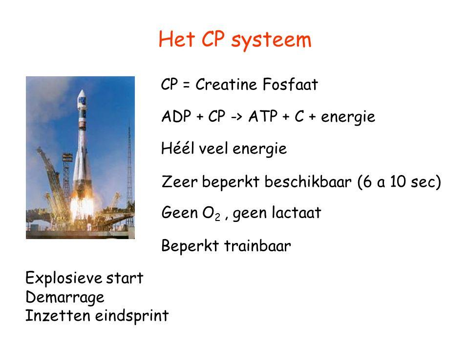 Het CP systeem CP = Creatine Fosfaat ADP + CP -> ATP + C + energie