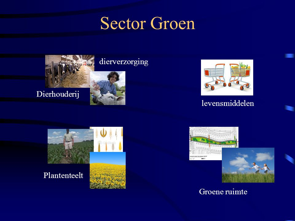 Sector Groen dierverzorging Dierhouderij levensmiddelen Plantenteelt