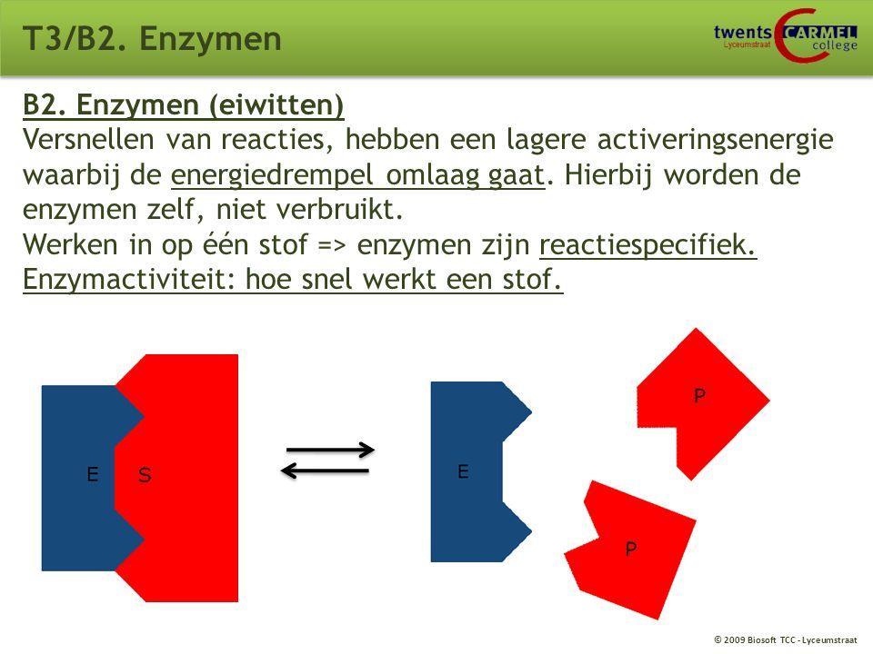 T3/B2. Enzymen