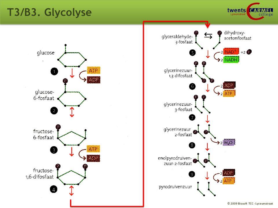 T3/B3. Glycolyse