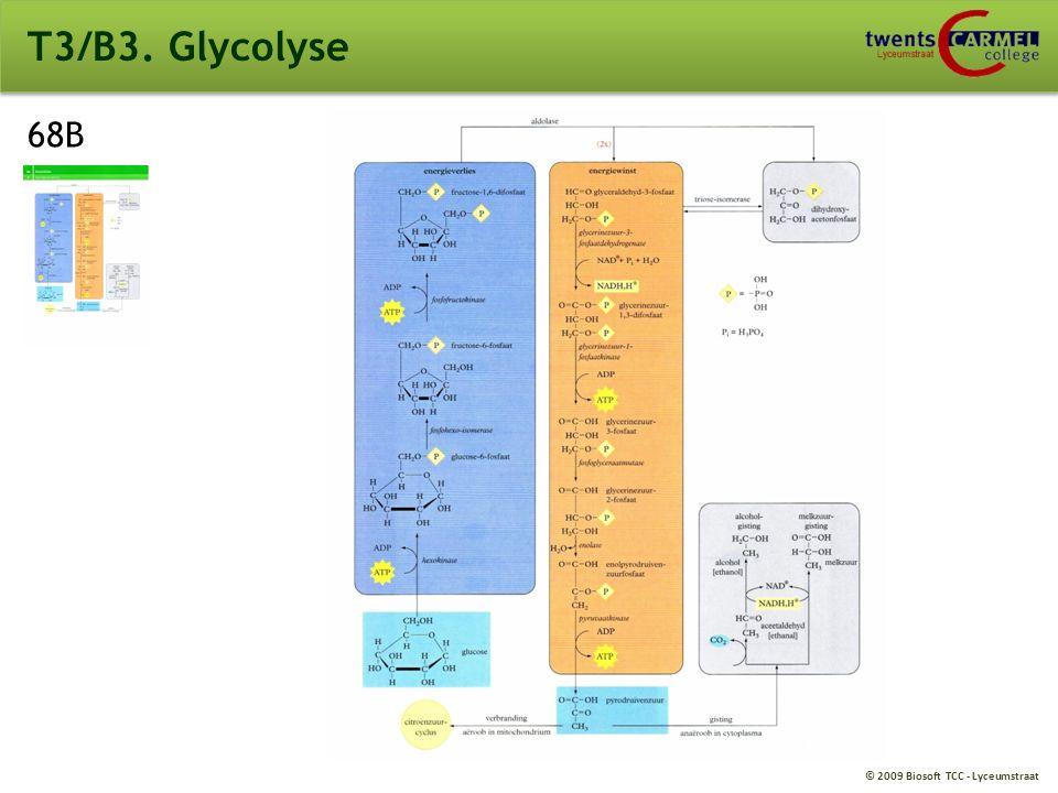 T3/B3. Glycolyse 68B