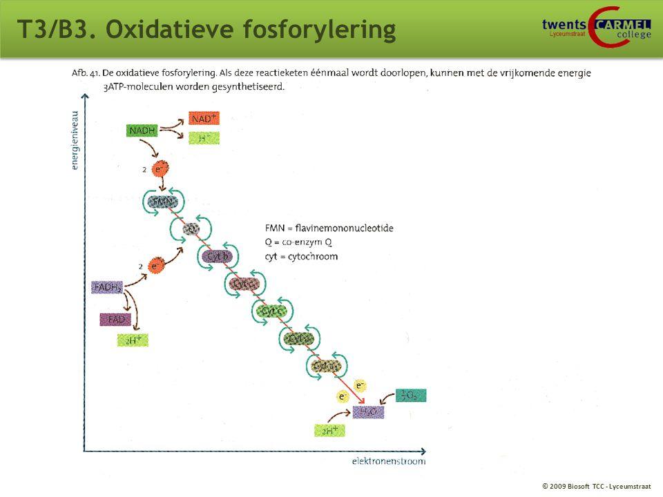 T3/B3. Oxidatieve fosforylering