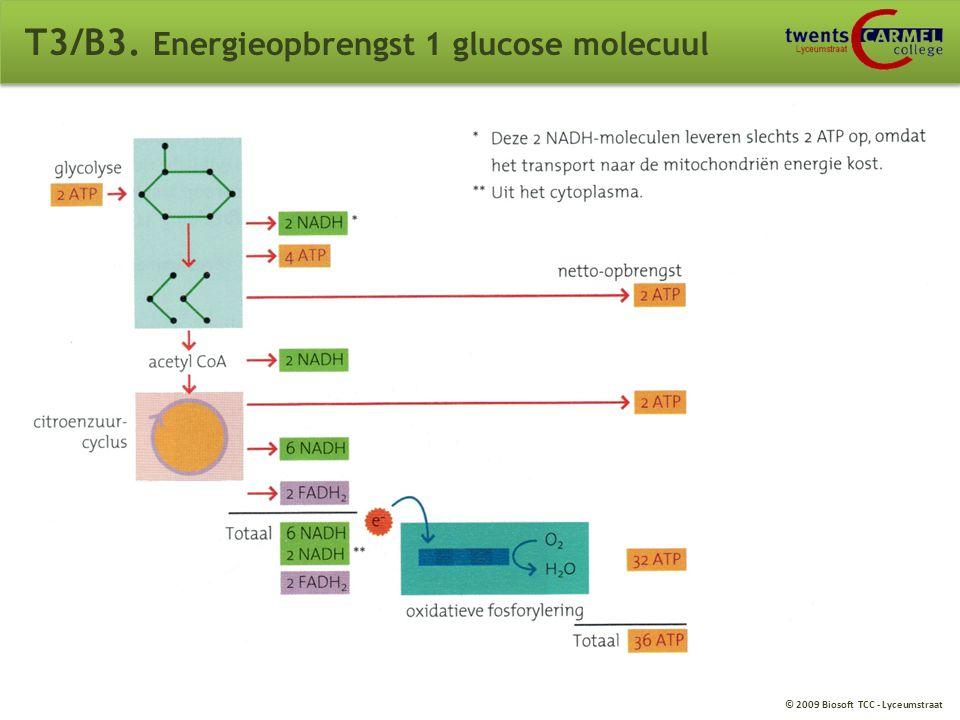 T3/B3. Energieopbrengst 1 glucose molecuul
