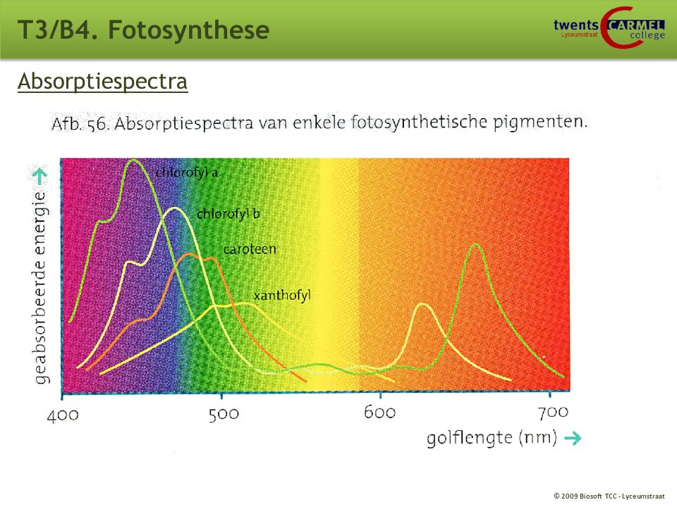 T3/B4. Fotosynthese Absorptiespectra